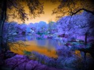 Cool Central Park Pic