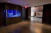 333 Rector Elevator Loby Fish Tank 1